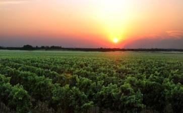 Nuovo protocollo per il vino salentino