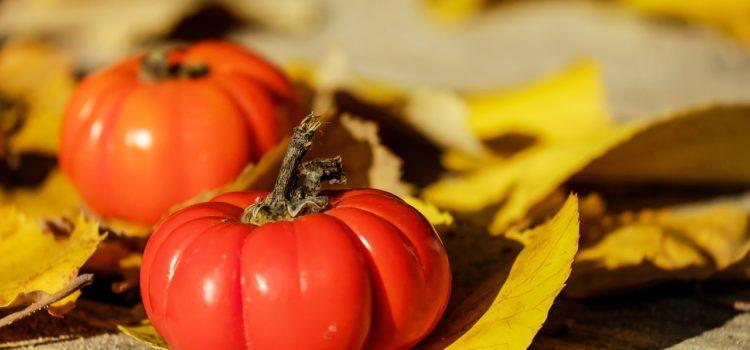 Dove trovare la migliore passata di pomodoro biologica