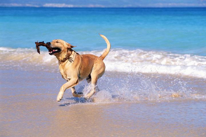 spiagge-cani-puglia