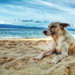Quali sono le spiagge in Puglia per cani