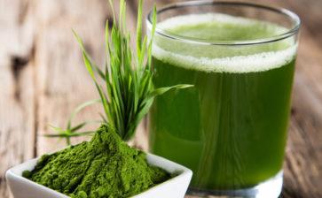 Spirulina, l'alga del futuro parla pugliese