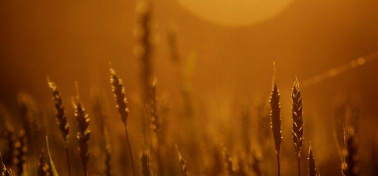 I contadini pugliesi: una saggezza a ritmo di fasi lunari