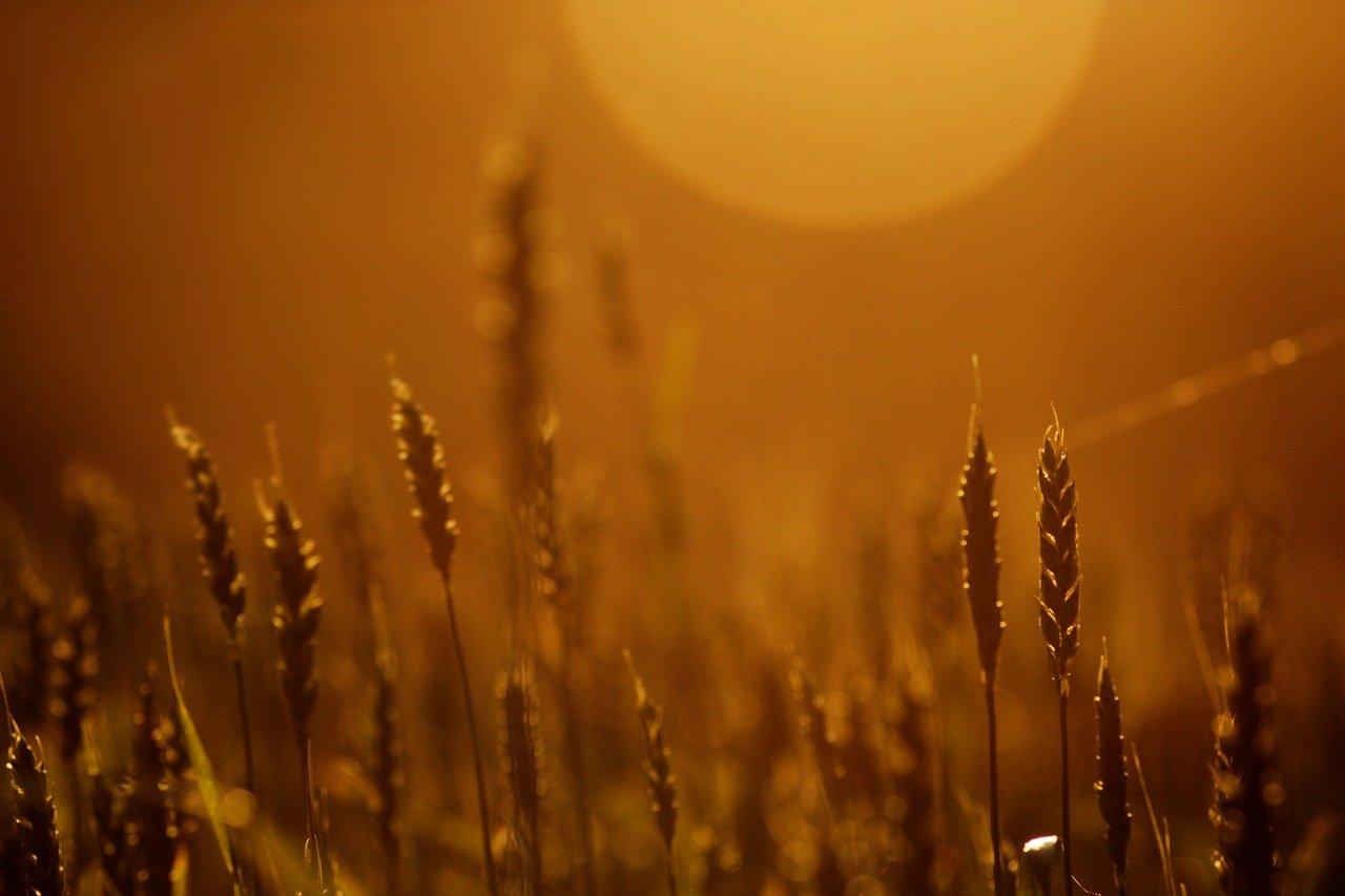 i contadini pugliesi, luna, lavori agricoli in Puglia – La Terra di Puglia