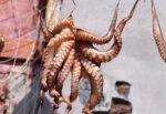 Bari: l'antico rito dell'arricciatura del polpo