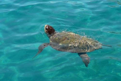 tartarughe marine puglia