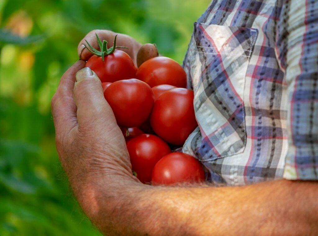 passata di pomodoro e conserve del salento - Laterradipuglia.it