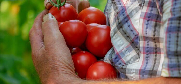 Passata di pomodoro pugliese: a settembre la dispensa si tinge di rosso