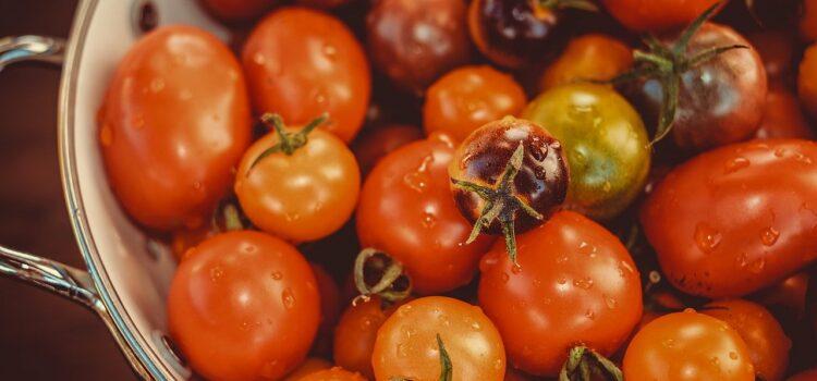 Pomodori pugliesi, non solo datterino