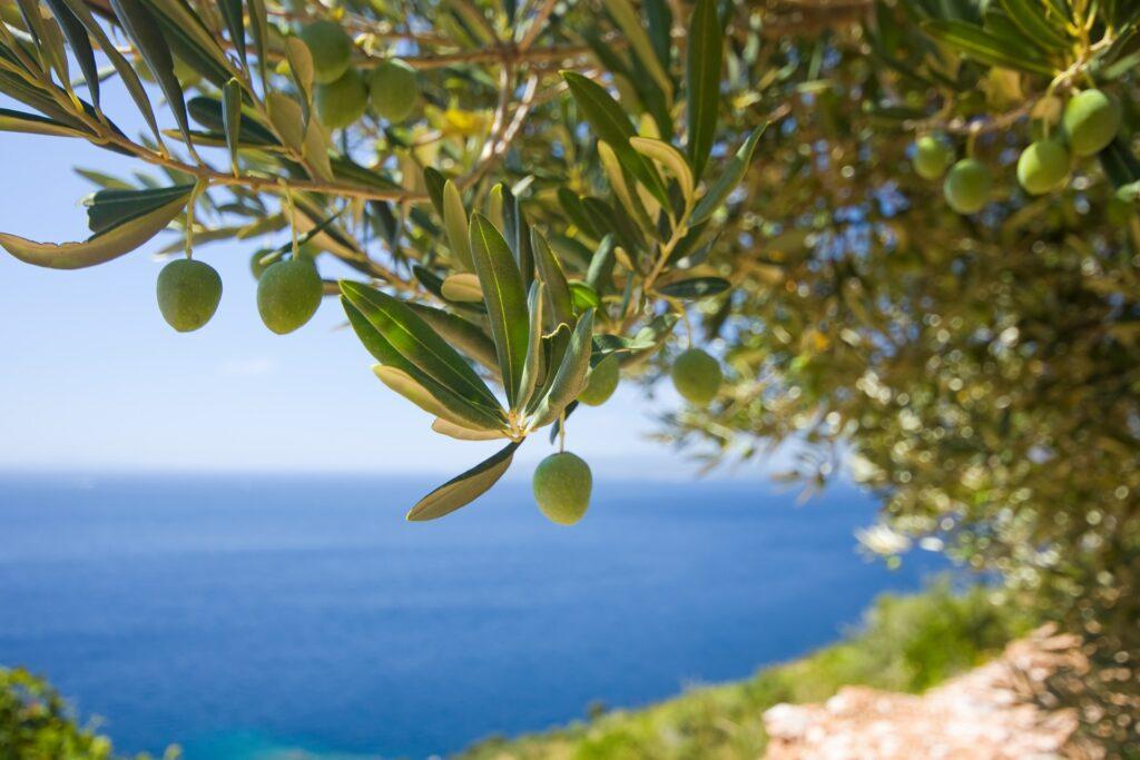 olio di oliva pugliese - La Terra Di Puglia