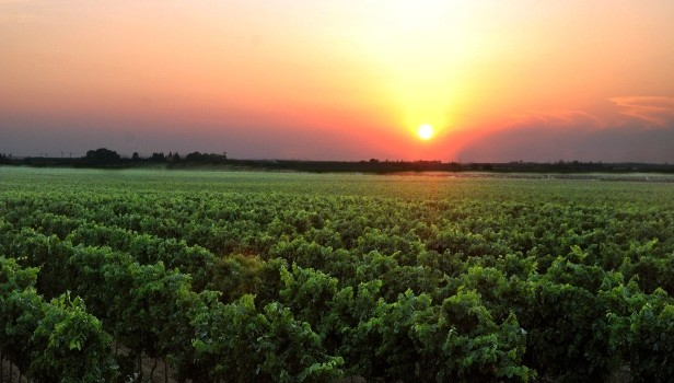 Un viaggio tra le vie del vino del Salento