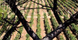 La Puglia guarda al Cile: opportunità imprenditoriali