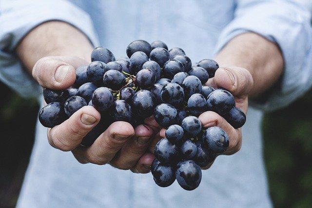 vin-cotto-gargano