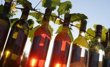 Il vino pugliese conquista il Giappone