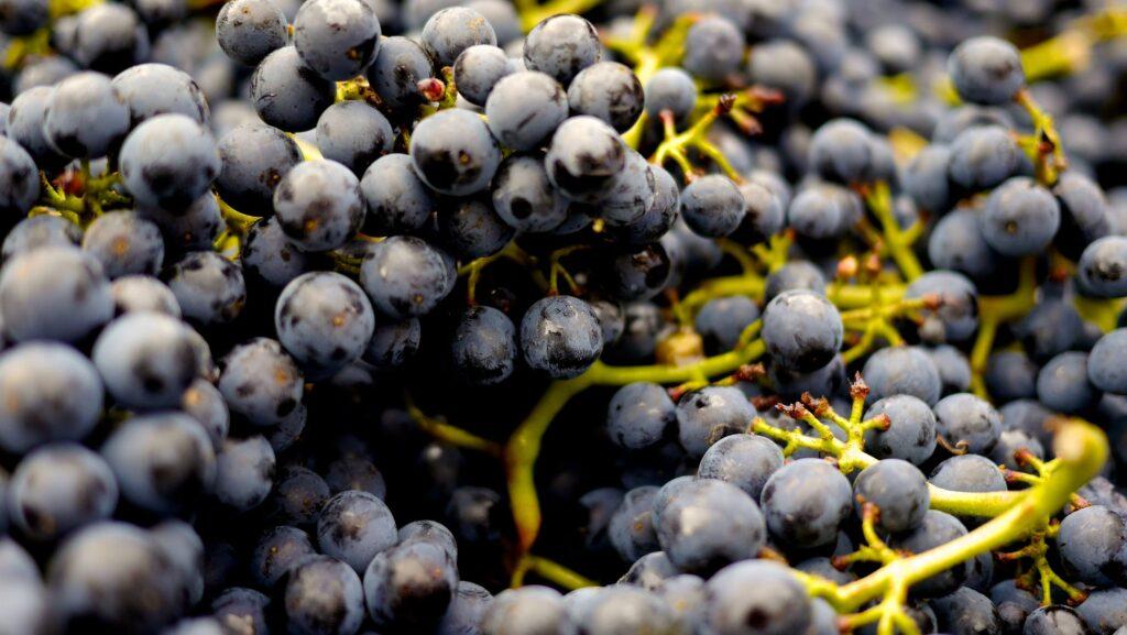 vini pugliesi biologici - La Terra Di Puglia