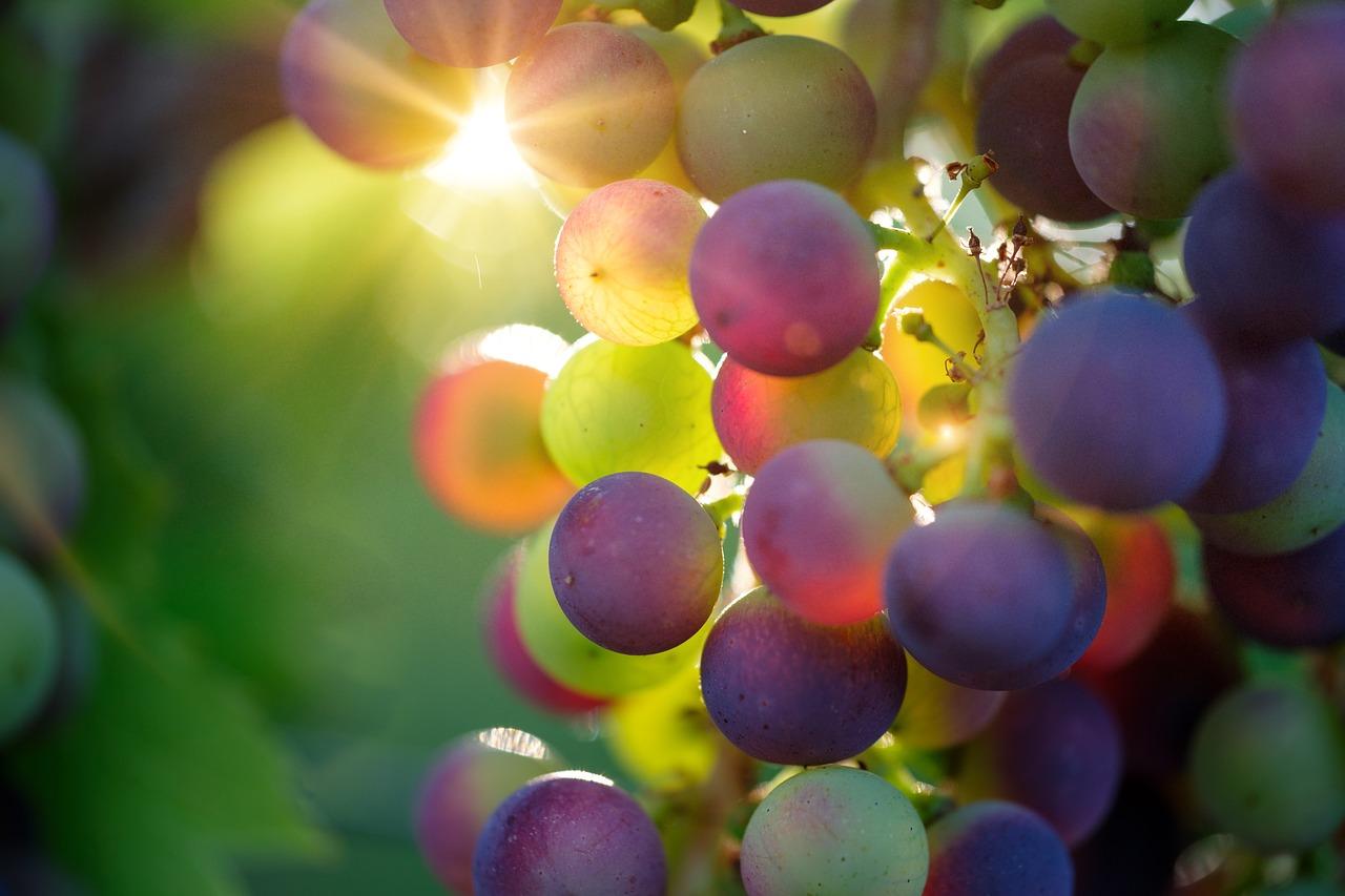 vino-primitivo-di-manduria-100-milioni-euro