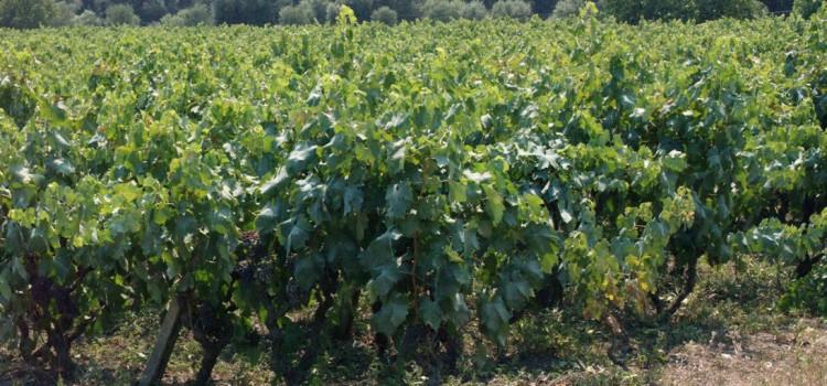 Prodotti tipici regionali pugliesi: 25 vini imperdibili