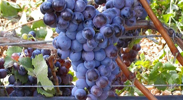 I 14 vini pugliesi premiati dal Gambero Rosso 2013