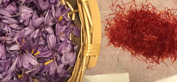 Zafferano: l'oro rosso che viene dal Salento